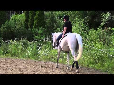 Elämäni hevonen