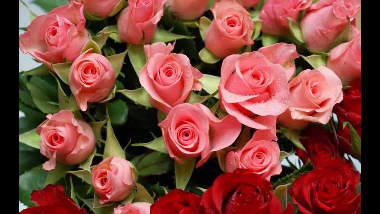 Шикарные розы с днём рождения