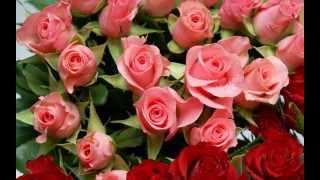 Розы и музыка. С днем Рождения.
