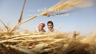 حصاد الخير.. الجيران لبعضها في جمع الشعير (صور وفيديو)