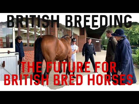 EQUINE BRIDGE TRAINING DAY | THE FUTURE FOR BRITISH BRED HORSES | HACKETT EQUINE VLOG