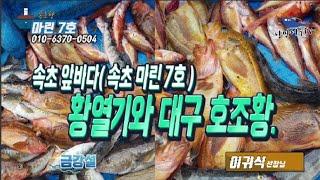 속초 앞바다 활열기 시즌 시작~ 대구도 조황도 호조황.