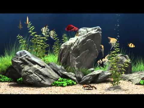 HD Aquarium Screensaver - Amazing Free Aqarium Screensaver Download In HD
