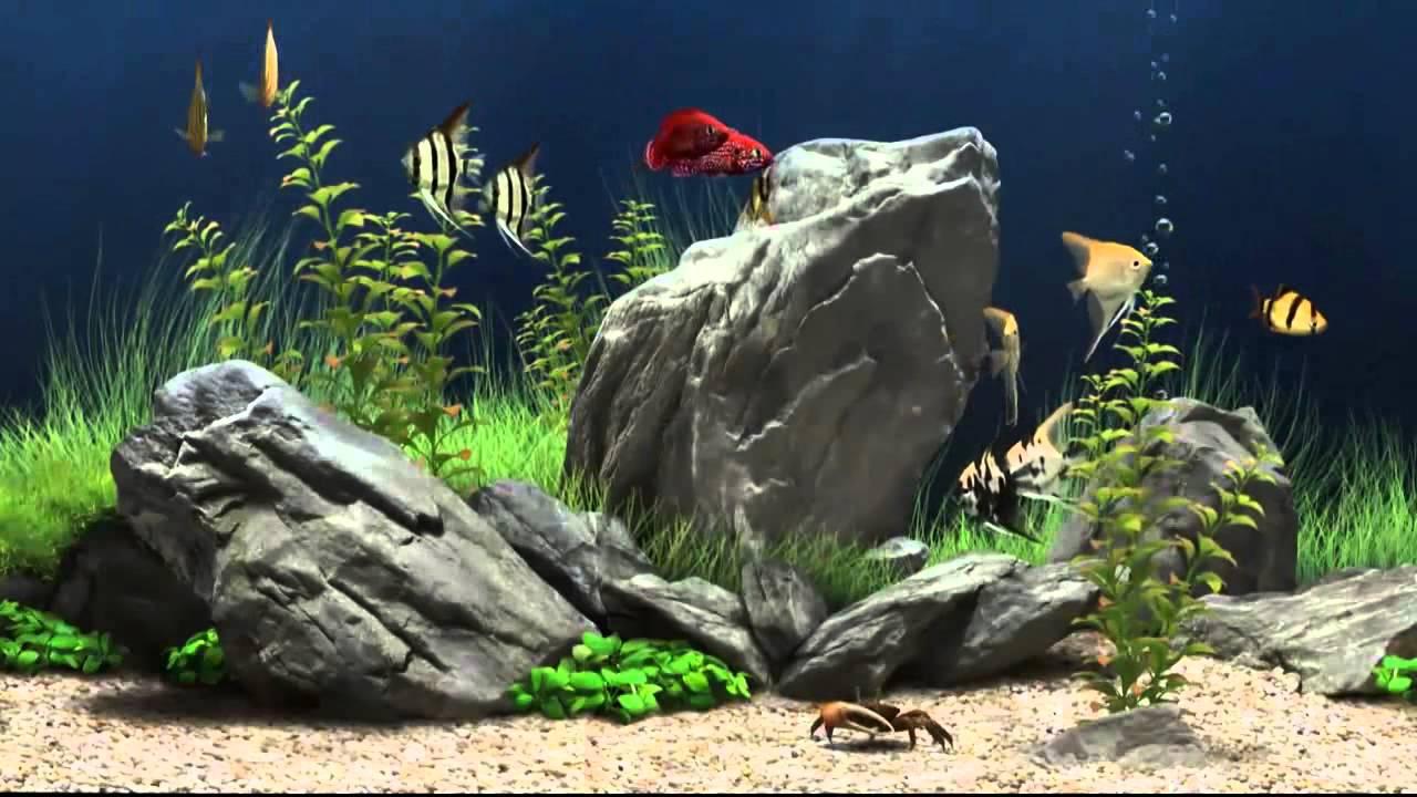 Hd aquarium screensaver amazing free aqarium screensaver for Screensaver hd gratis