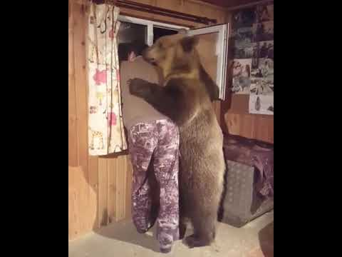 Meanwhile In Russia. Bear Friend