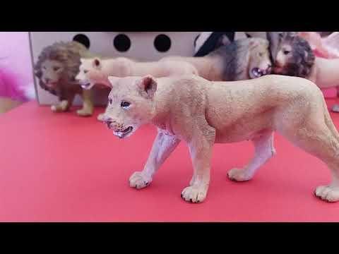 Мой прайд львов