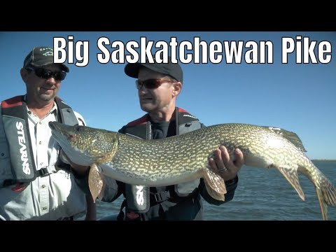 Using Swimbaits For Big Saskatchewan Pike | Fish'n Canada