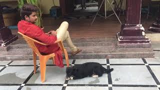 Kalyana vaibhogam shoot break time with buddy's #petlover