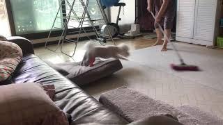 둥이 vs 밀걸레