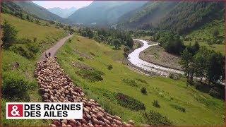 Transhumance dans les Alpes