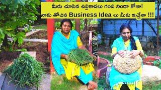Spring Onions Harvesting - Super market Inspiring/Natural Health care/ New Business ideas/ఉల్లికాడలు