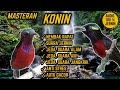 Suara Masteran Konin Nembak Rapat Jeda Terapi Air Alam Anti Stres  Mp3 - Mp4 Download
