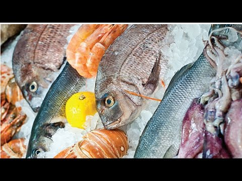 Criação de Peixes - Venda de peixes