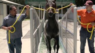 Spring Lane Ranch, LLC - Equine Rehabilitation
