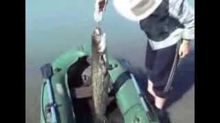 Казахстан Рыбалка на озере Балхаш(Рыбалка и отдых., 2009-07-30T06:01:31.000Z)