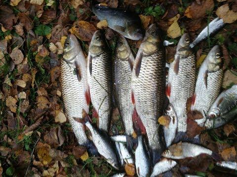 Рыбалка на фидер. Река Угра Калужская область, октябрь 2019
