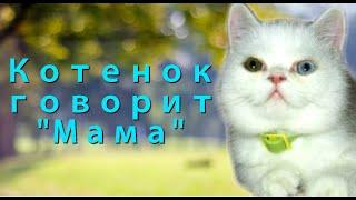 """Котенок говорит """"мама"""""""