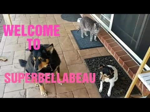 Cute dogs Bella and Beau and Felix the cat's new channel trailer!