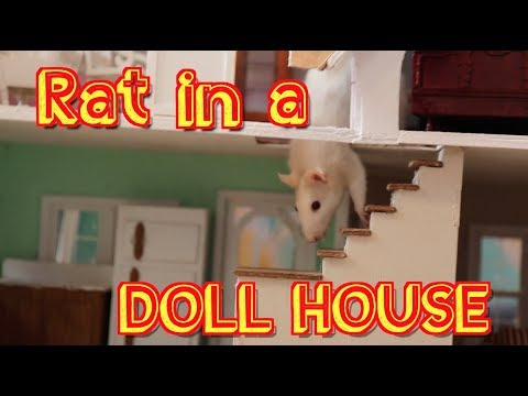Rat In A Dollhouse - Starring Sunny The Rat - Parry Gripp
