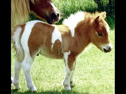 Petit poney - chanson