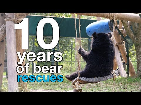 A decade of bear rescues in Vietnam
