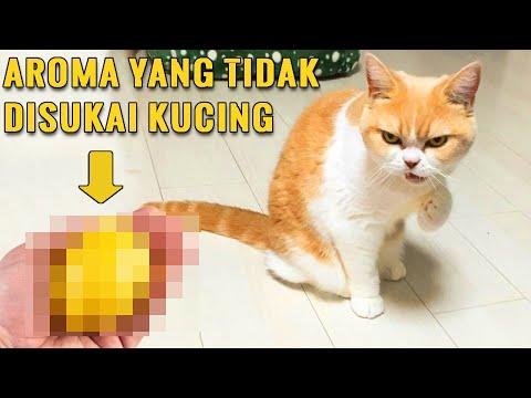 3 Aroma Yang Tidak Disukai Kucing Bikin Kucing Tidak Betah Di Rumah