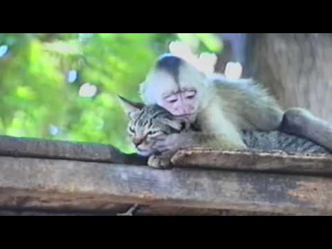 Обезьянка любит кота - Кайфуем