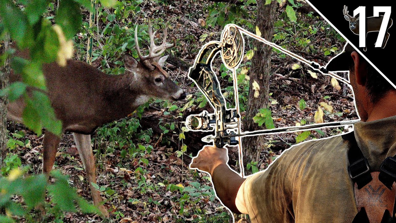 Download BUCKS IN DAYLIGHT!!! - (Bowhunting the OCTOBER Lull)