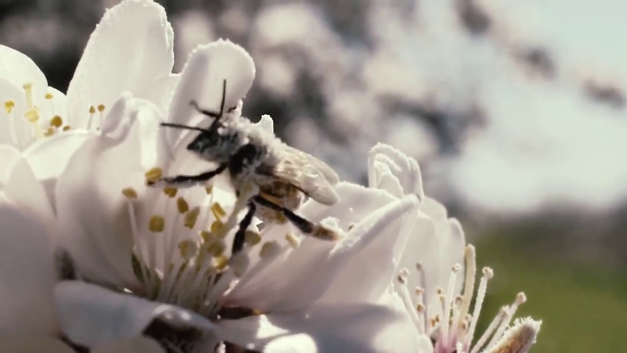 Download Fungicides on Bees - More Than Honey (2012)
