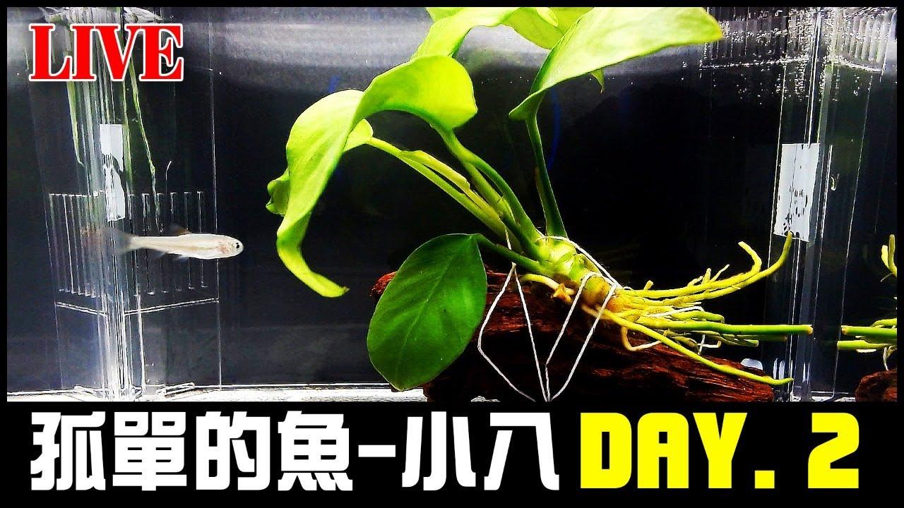 【LIVE】孤單的魚 小八 DAY.2 | 水族箱 | 養魚 | 音樂 | 數位魚缸 | 療癒  | 放鬆 | 睡眠 | 生態缸 | 魚缸 | Aquarium | Music | すいそう | 魚仔