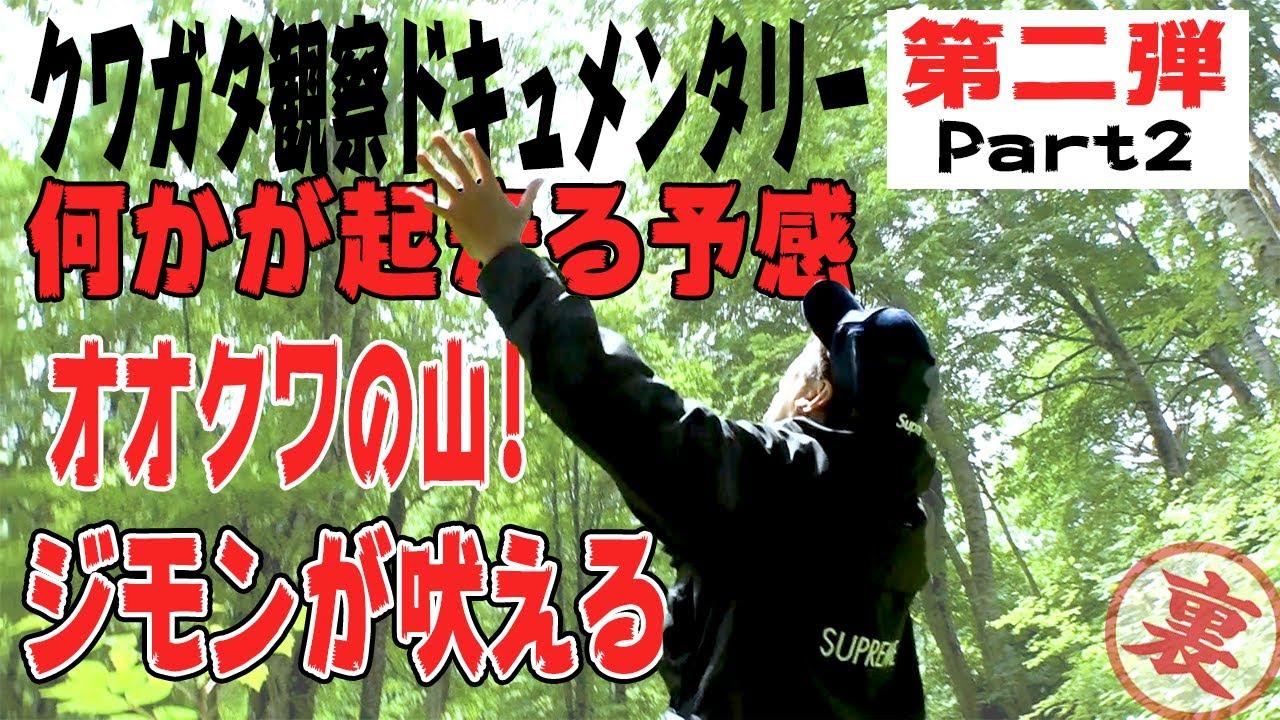 【オオクワガタ】灯火観察の旅!ネイチャー炸裂!