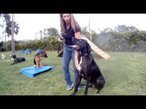 PCF K-9 Group Class 06/15 part 2