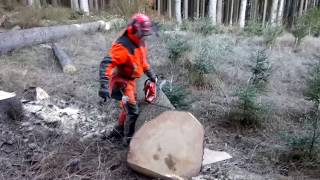 Complete cutting of the tree with the Husqvarna 560XP chain saw!