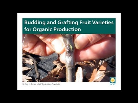 Budding and Grafting Fruit Varieties for Organic Production