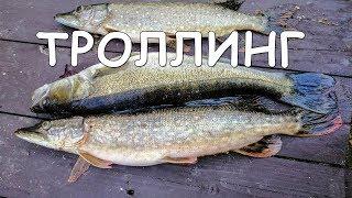 Щучья Икра Дом за три тысячи Новый Мэр Москвы Рыбалка на Волге Аренда дома