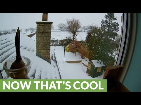 Soothing 7 day snowfall and melt time lapse