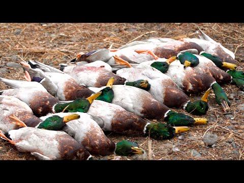 Oregon Duck Hunting