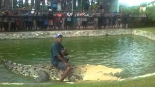 Man rides on deadly crocodile