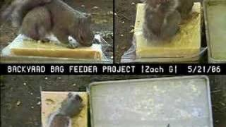 Squirrels From 3 Angles! [backyard Bag Feeder Project]