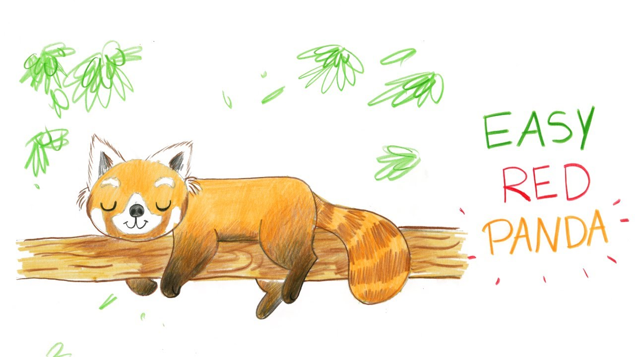 How to draw a cute red panda easy way comment dessiner facilement un panda roux