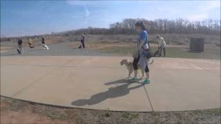 Pack Walks, Dog Obedience Training
