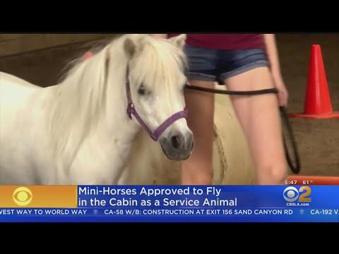 Super Martinez - Sabias que los ponies están aprobados para servicio en los vuelos?