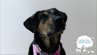 Shelter Spotlight - Jada @ Chesapeake Humane Society