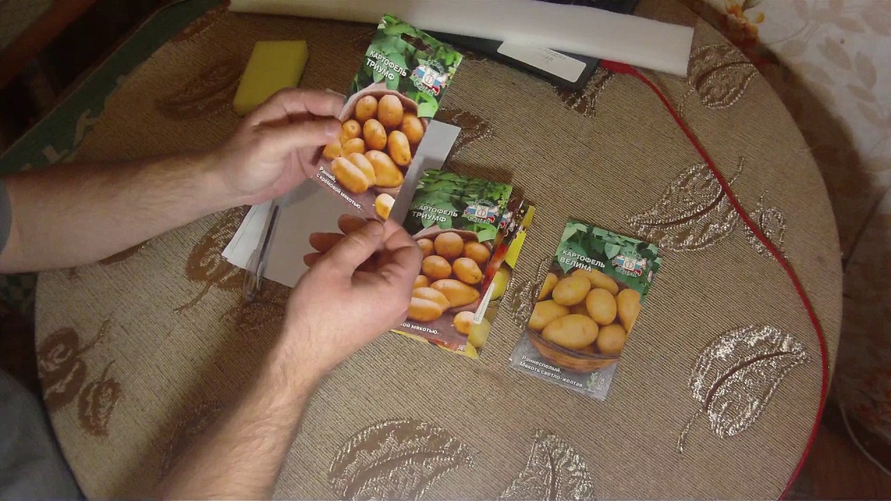 Семена картофеля гидропоника что хуже марихуана или табак