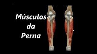 Fotos de pernas anatomia