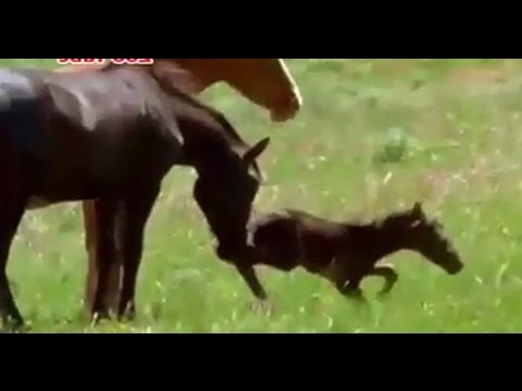 horse kills foal after birth