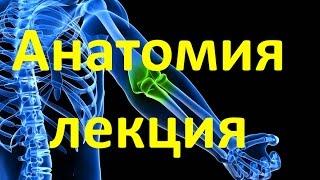 Анатомия для массажистов | День 1