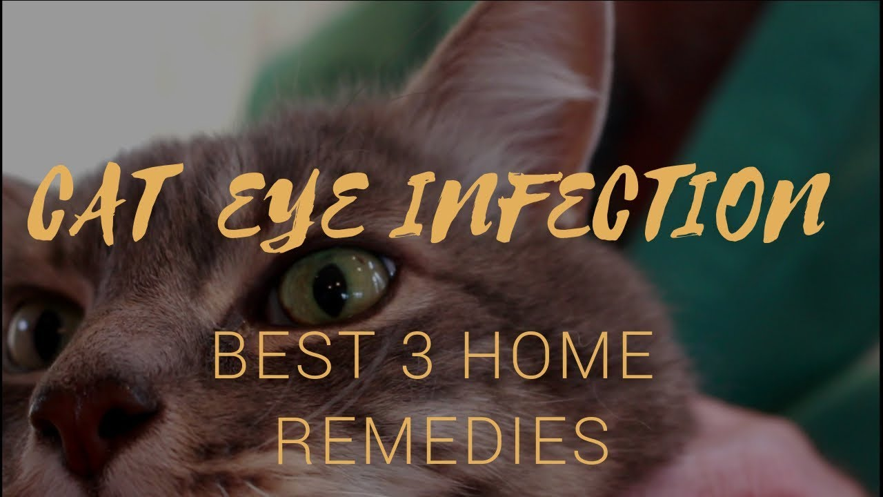 Cat With Infected Eye Best 3 Holistic Remedies Youtube
