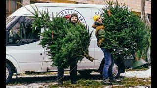 Новогодние живые елки и пихты у Мастер Ёлкина