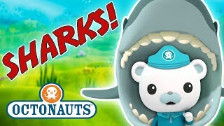 Octonauts - Learn about Sharks | Cartoons for Kids | Underwater Sea Education